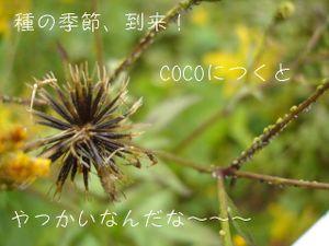 Dsc00243